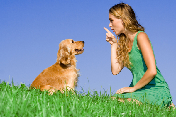 Be an Dog Training Pro with Dog and lady image